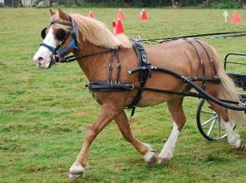 Equifor harness to suit 12.2hh