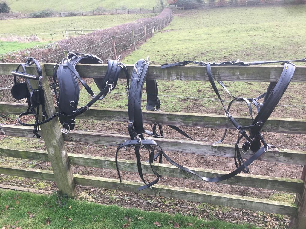 Pony pairs presentation harness